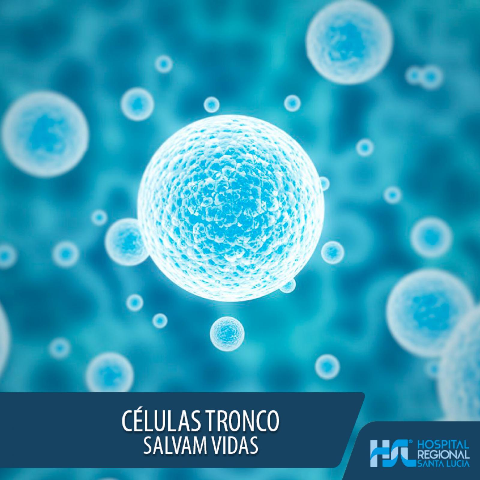 Você sabe o que são células tronco?