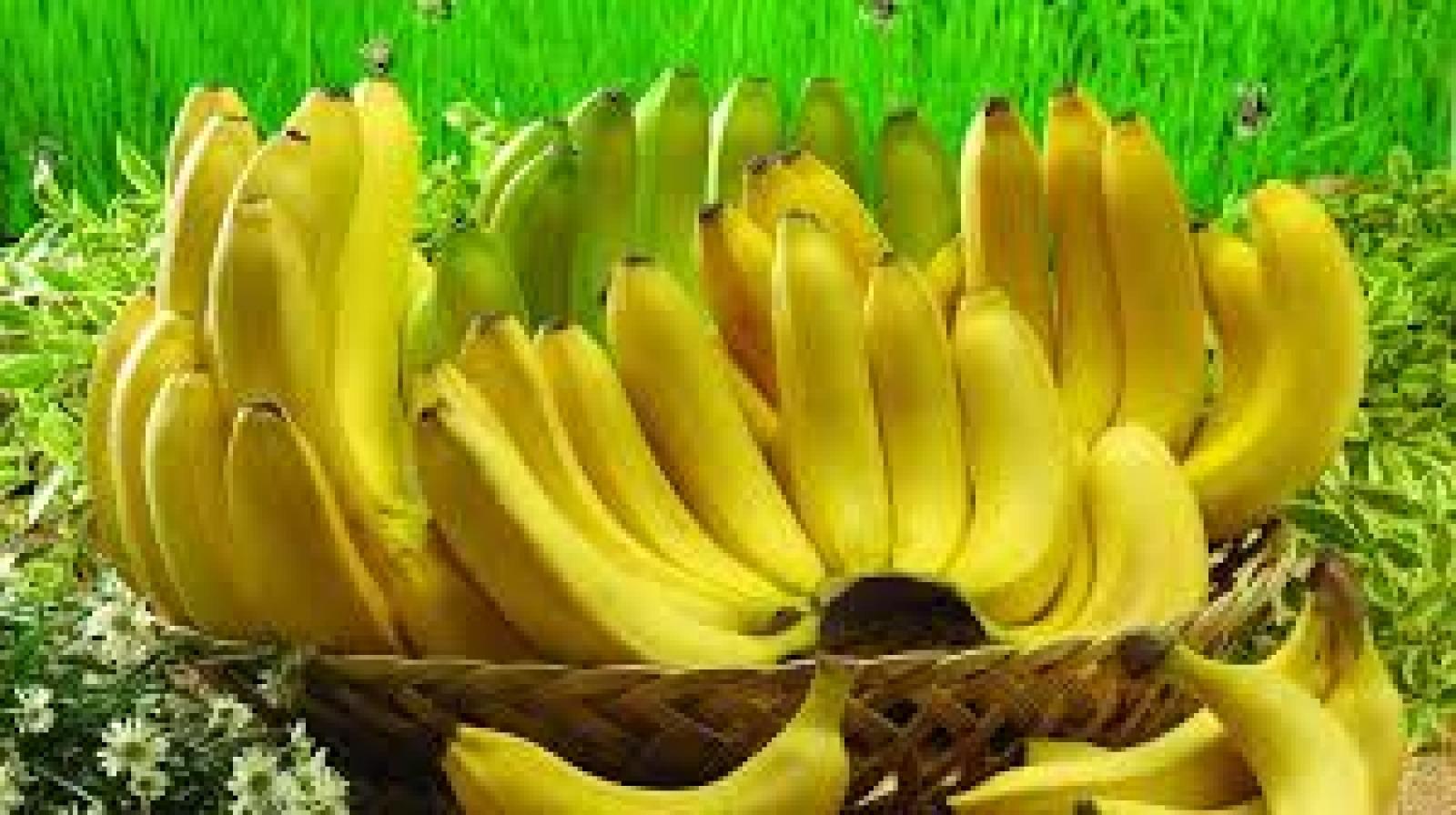 Banana como pré-treino